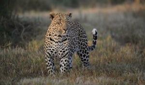 Unique Kruger Experience