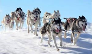 Finlandia: alla scoperta della Lapponia